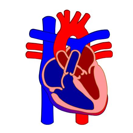 Test corazón